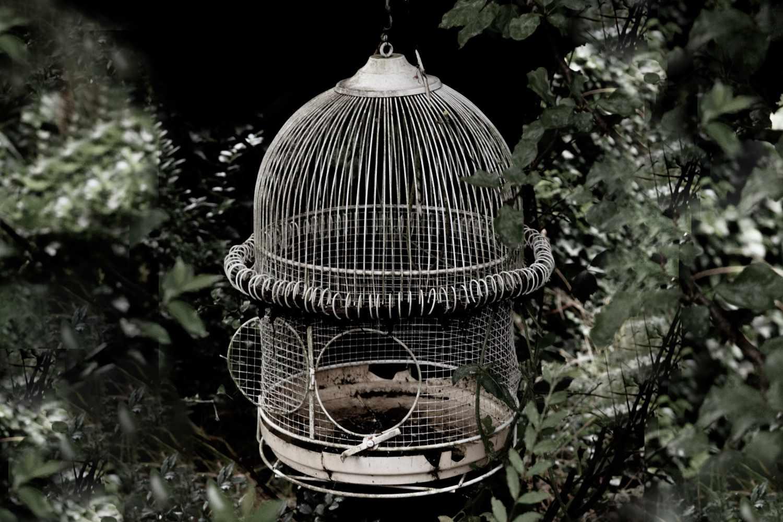 Käfig ohne Vogel