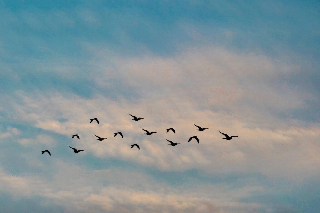 Zugvögel kennen ihr Ziel